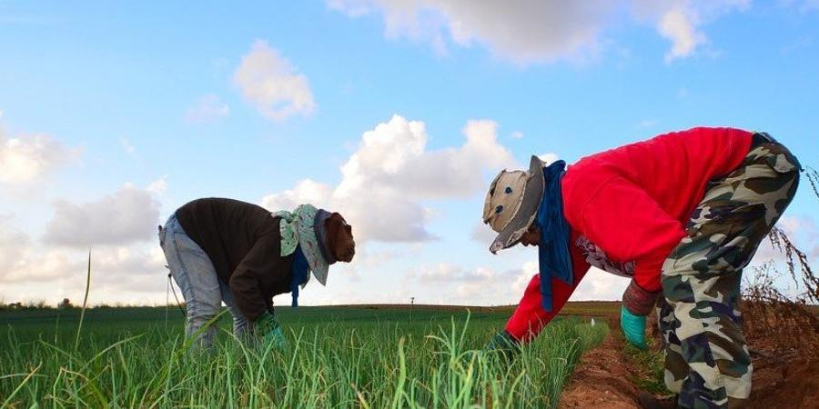 Farm workers are being super exploited. Photo: amir appel/Flickr (CC BY 2.0)